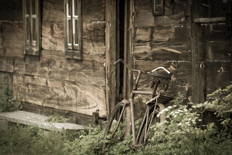 Sz. Niedzwiedzinski - Białowieza